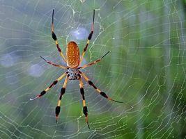 Фото бесплатно spider, паутина, разноцветный