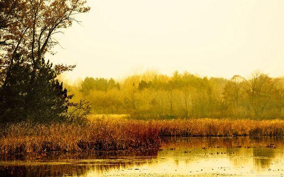 Фото бесплатно заводь, вода, тростник