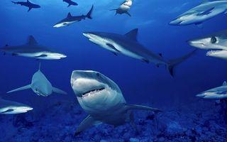 Фото бесплатно акулы, океан, глубина, челюсти, подводный мир, разное