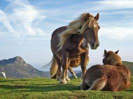 Бесплатные фото лошадь,трава,свет,небо,гора,туча,земля