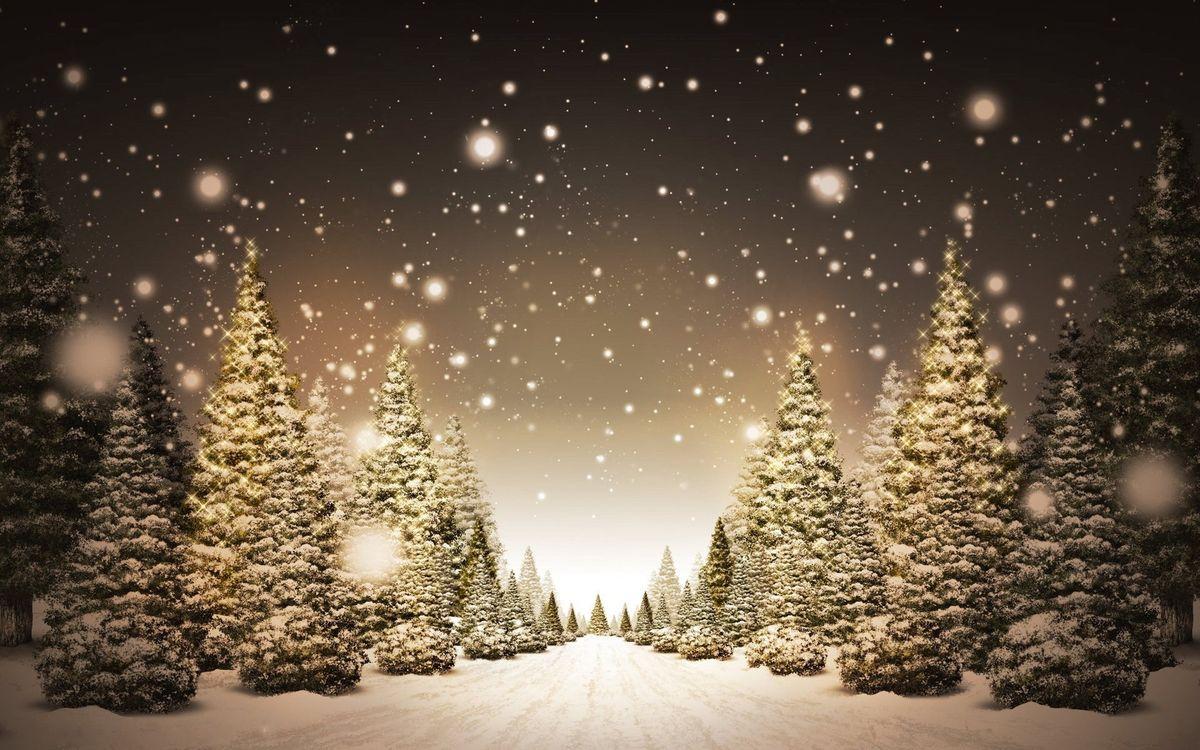 Обои елки, снег, тропинка картинки на телефон