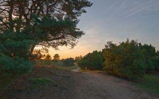 Фото бесплатно деревья, трава, дорога