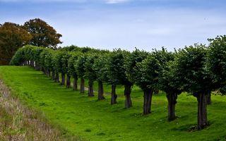 Фото бесплатно деревья, аллея, листья