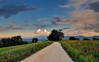 Бесплатные фото дорога,трава,цветы,деревья,небо,облака,пейзажи