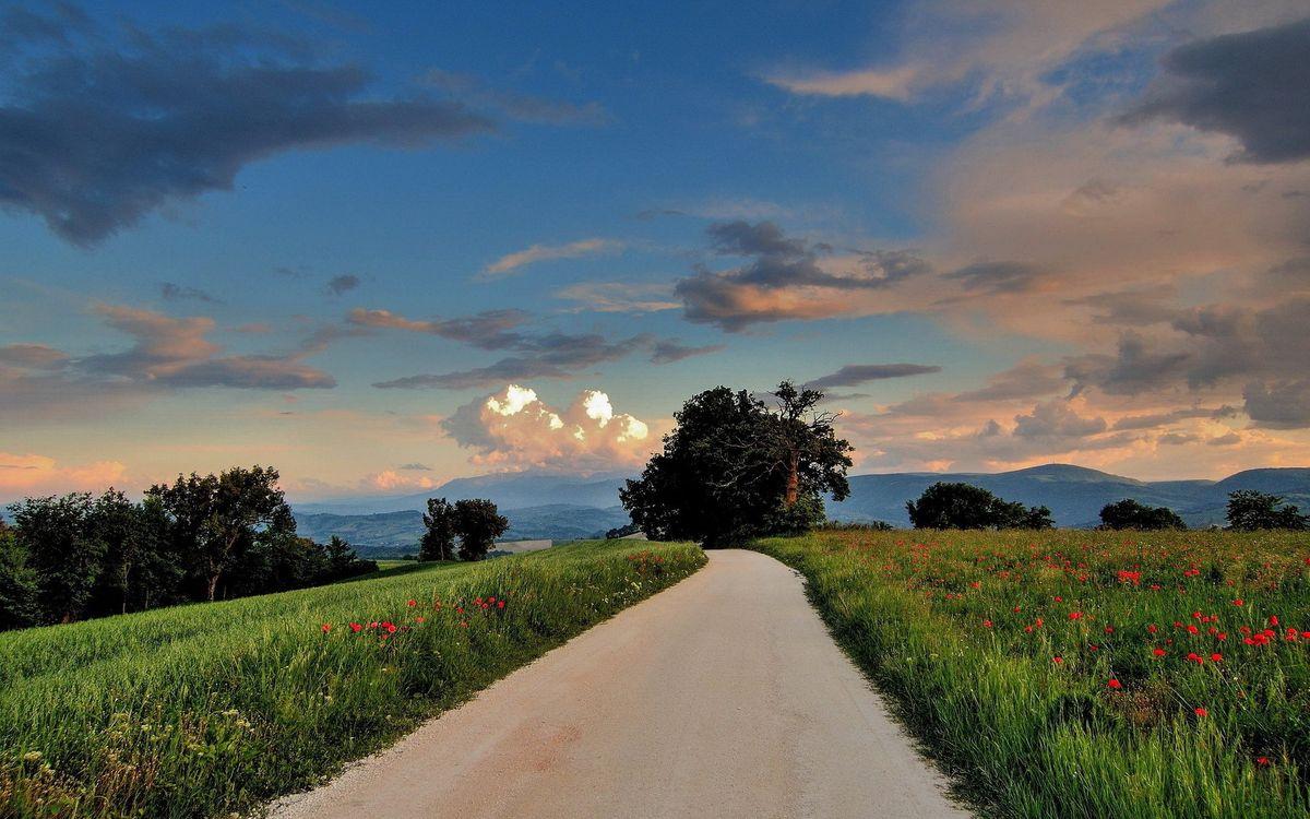 Фото бесплатно дорога, трава, цветы, деревья, небо, облака, пейзажи - на рабочий стол