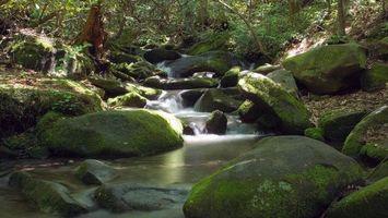 Бесплатные фото камни, вода, речка, лес, зелень, трава, природа