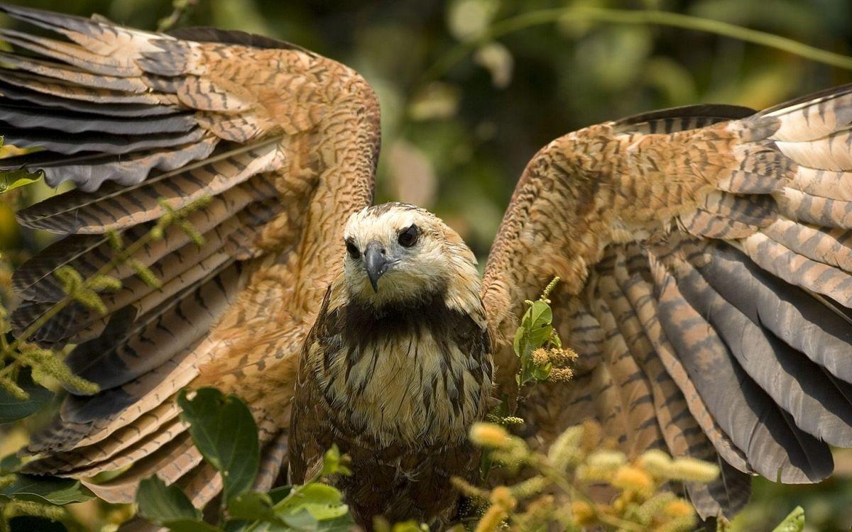 Фото бесплатно клюв, глаза, крылья, перья, ветки, листья, птицы, птицы