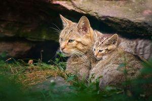 Бесплатные фото кошка,котенок,кот,сидят,пушистые,шерсть,полосатые