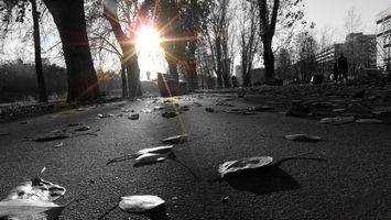 Бесплатные фото лавочка,скамейка,парк,асфальт,листья,осень,листопад