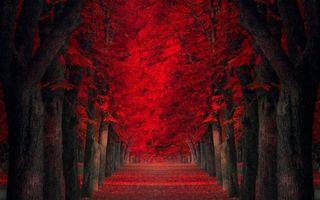 Photo free autumn, alley, trees