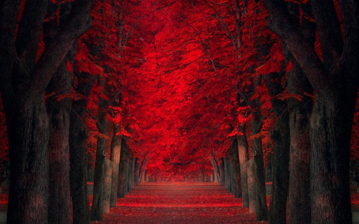 Фото бесплатно осень, аллея, деревья, сволы, листва, красная, пейзажи, пейзажи