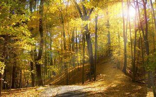 Фото бесплатно осень, лес, деревья, листва, желтая, дорога, солнце, природа