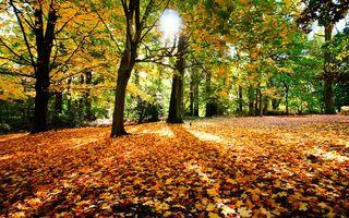 Бесплатные фото осень,листопад,лес,листья,солнце,деревья,природа