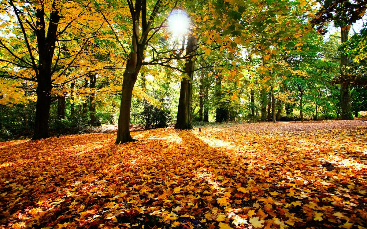 Фото бесплатно осень, листопад, лес, листья, солнце, деревья, природа, природа - скачать на рабочий стол