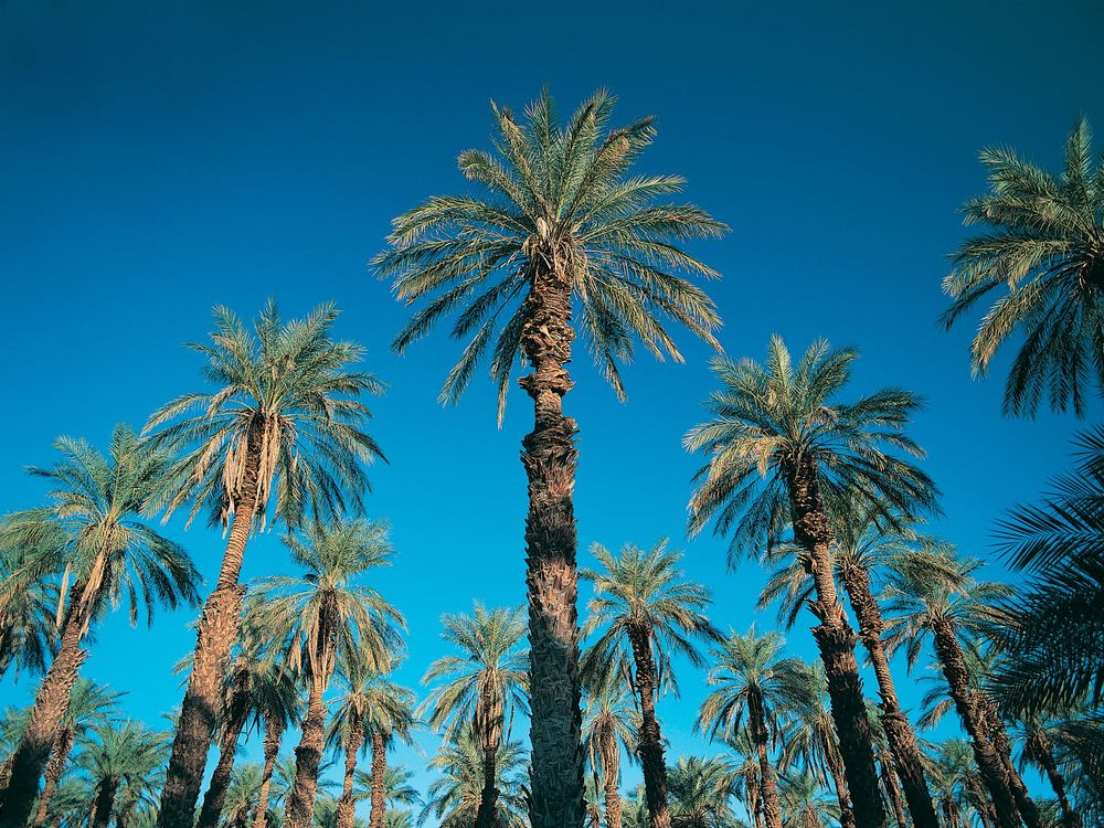 Фото бесплатно остров, африка, жара, лето, пальмы, небо, листья, природа, природа