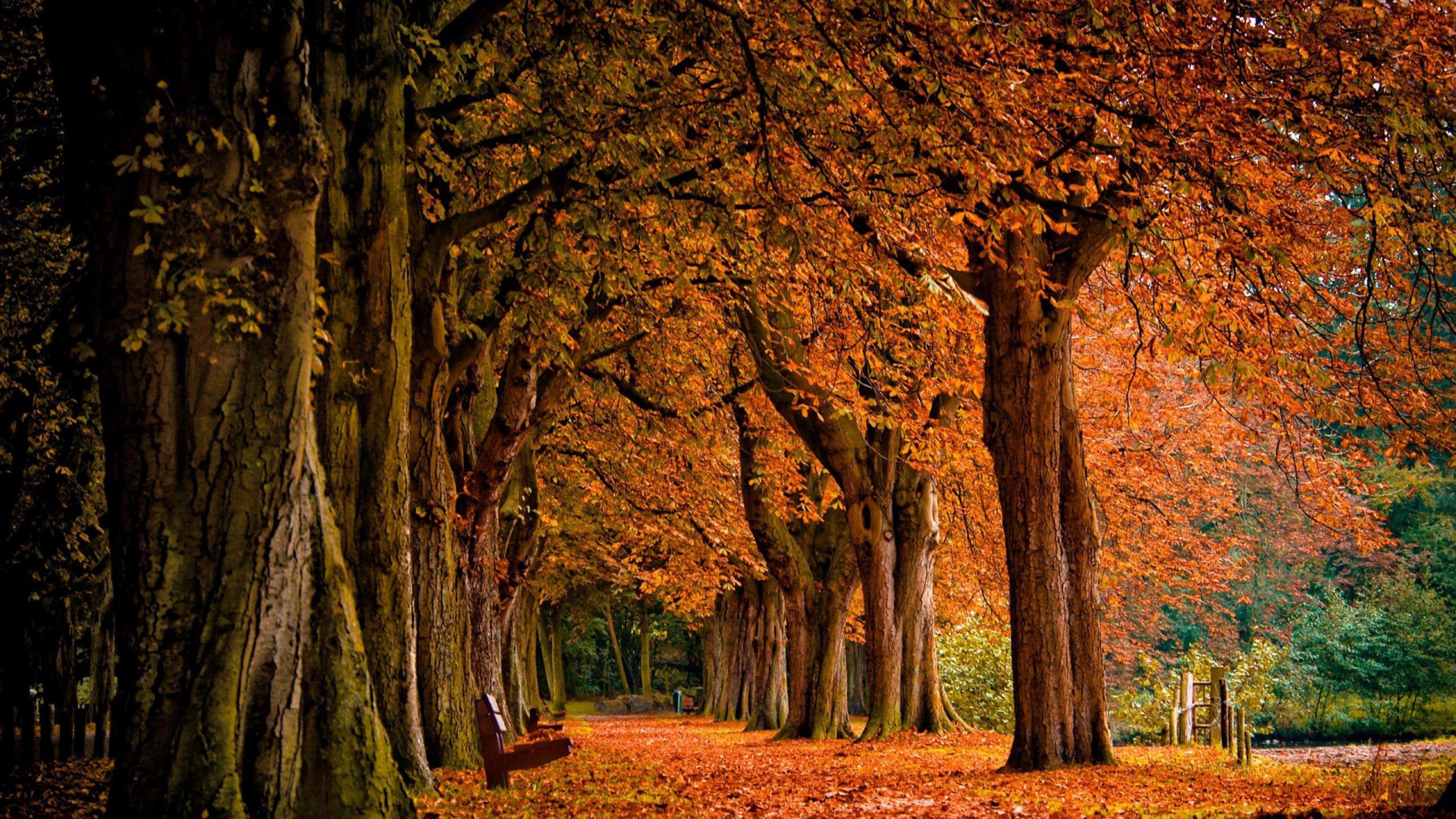 Обои парк, лес, скамья, лавочка