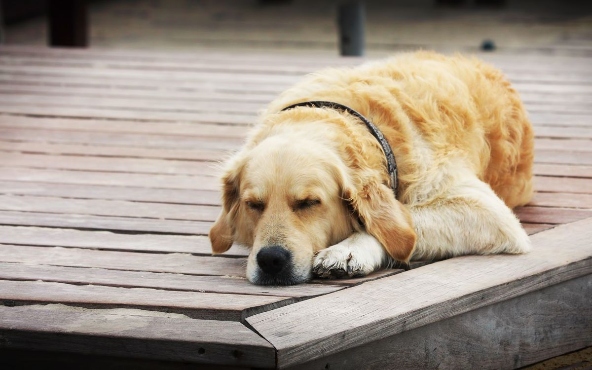 Фото бесплатно пес, щенок, шерсть - на рабочий стол