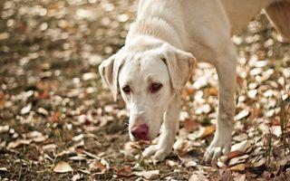 Заставки пес, уши, усы