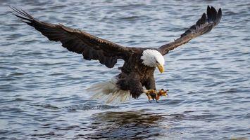 Фото бесплатно птица, воды, крылья