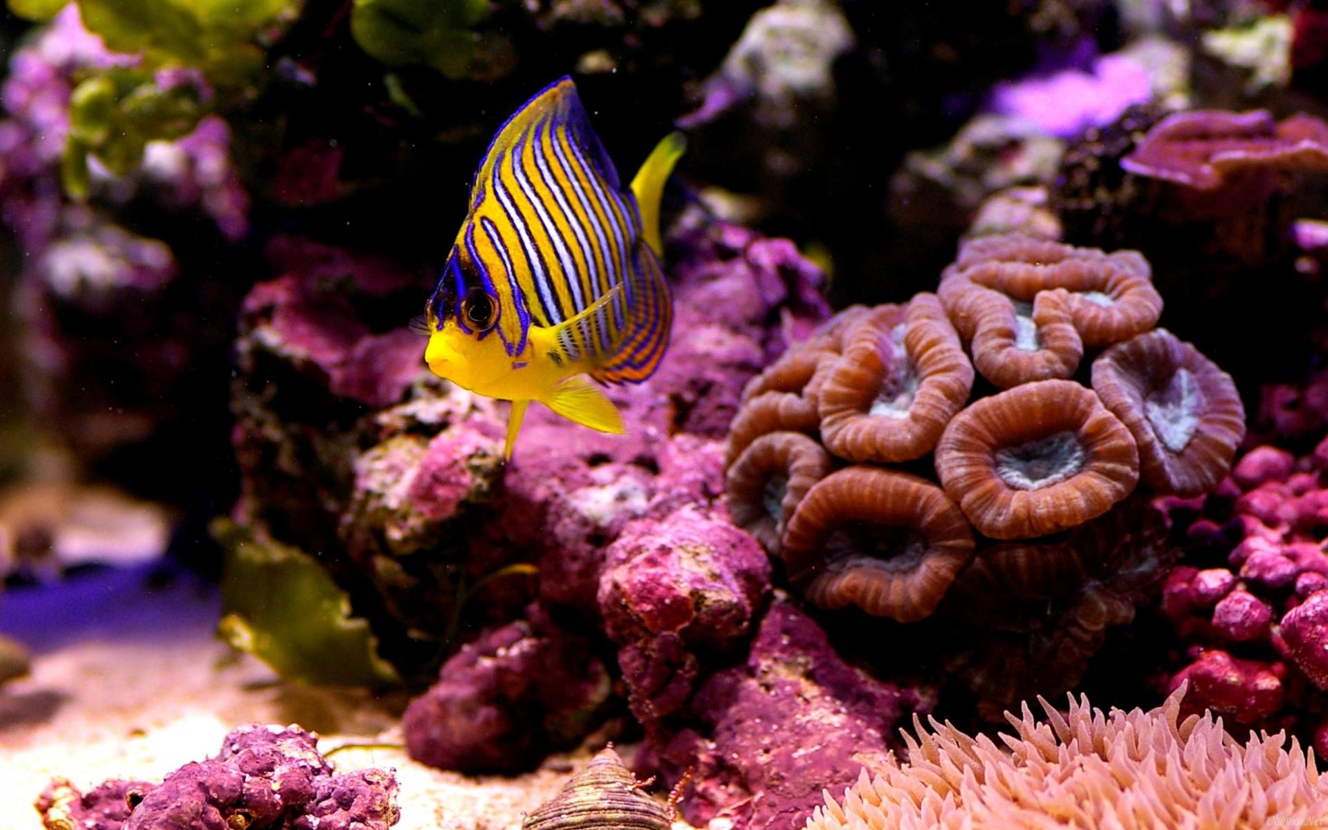 рыбка, маленькая, коралл