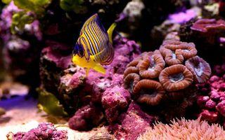 Фото бесплатно рыбка, маленькая, коралл, аквариум, губка, дно, жители, расцветка, порода, подводный мир