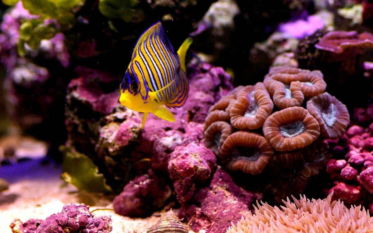 Фото бесплатно рыбка, маленькая, коралл - на рабочий стол