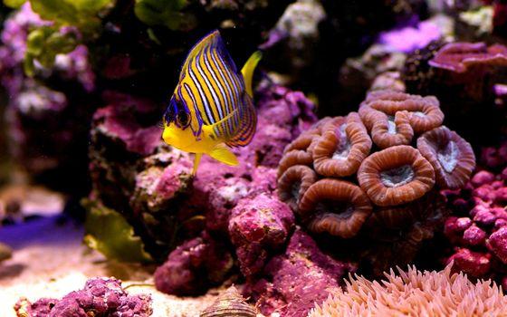 Фото бесплатно рыбка, маленькая, коралл