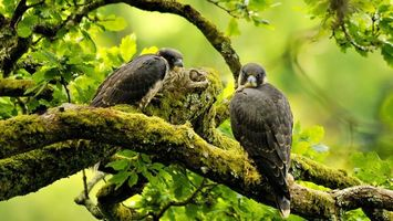 Photo free falcons, eyes, beak