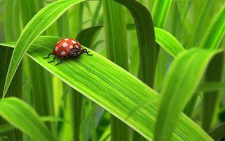 Фото бесплатно трава, зеленая, божья коровка