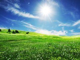 Фото бесплатно трава, цветки, весна