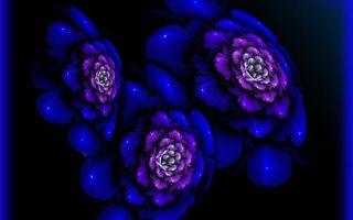 Заставки цветки,лепестки,графика,синие,фон,черный,букет