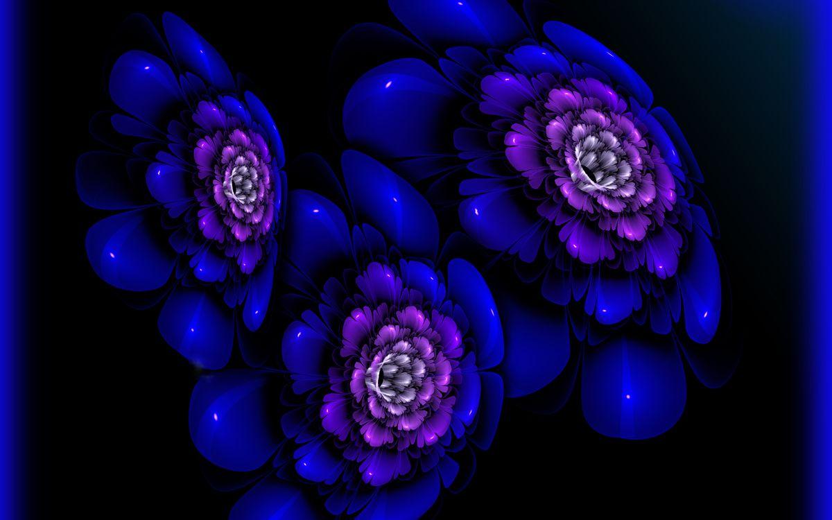 Фото бесплатно цветки, лепестки, графика, синие, фон, черный, букет, разное, цветы, цветы