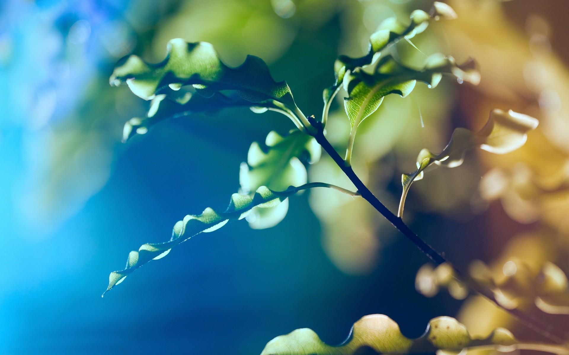 ветка макро зелень цветы бесплатно