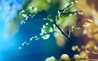 Фото бесплатно ветка, дерево, листья, фон, мутный, зеленый, парк, лето, фото, природа
