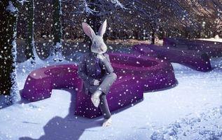 Фото бесплатно заяц, уши, снег