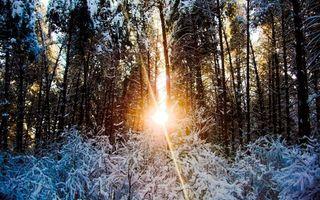Фото бесплатно зима, мороз, лес
