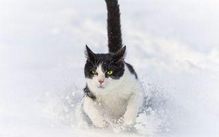 Фото бесплатно зима, снег, сугроб