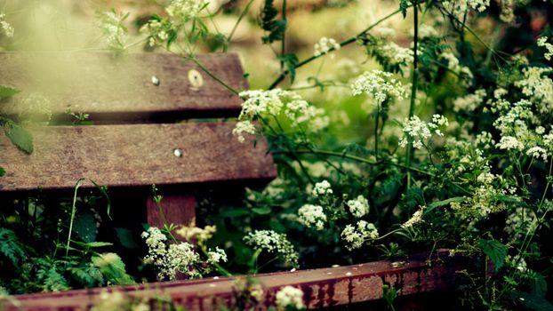 Photo free shop, brown, bushes