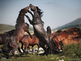 Фото бесплатно кони, лошади, коричневый