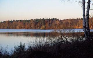 Фото бесплатно береза, лес, трава, озеро, море, вода, волны, бриз, небо, природа, пейзажи