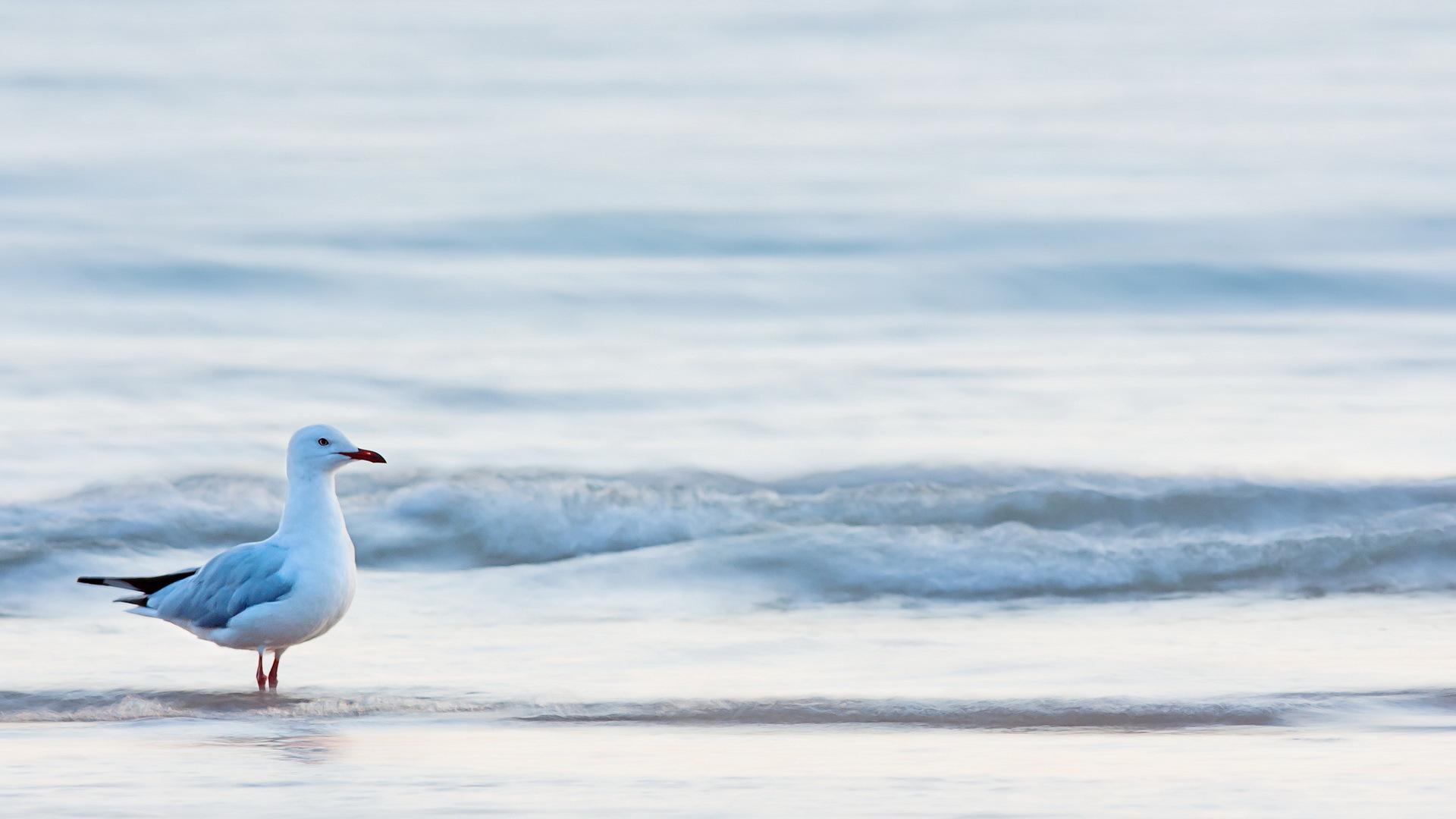 Чайка на песке без регистрации