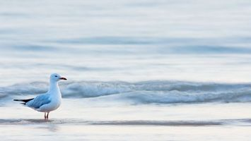 Фото бесплатно чайка, берег, моря