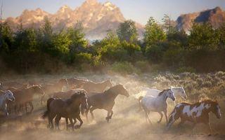 Заставки кони, разные, табун, бегут, пыль, деревья, животные
