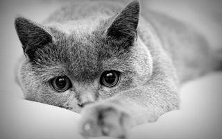 Бесплатные фото кот,уши,глаза,лапы,когти,взгляд,нос