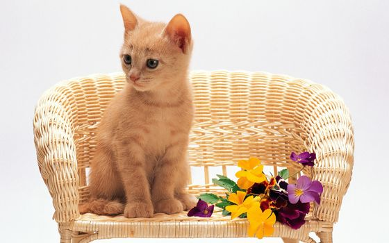 Фото бесплатно котенок, кресло, цветки