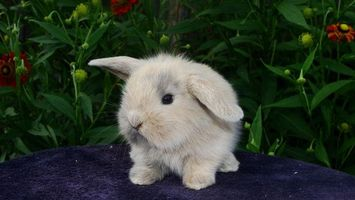 Фото бесплатно кролик, заяц, шерсть