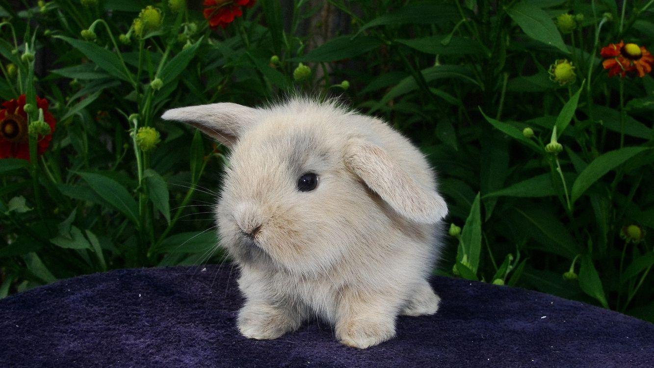 Фото бесплатно кролик, заяц, шерсть, пушистый, лапы, уши, глаза, нос, трава, животные, животные