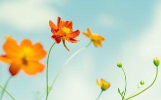 Фото бесплатно лепестки, оранжевый, стебель