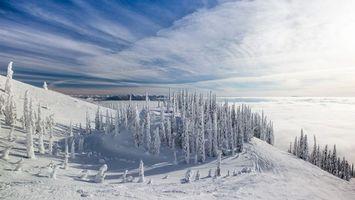 Фото бесплатно лес, деревья, снег