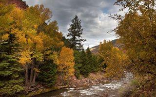 Заставки лес,река,горная река,деревья,вода,камни,возвышение
